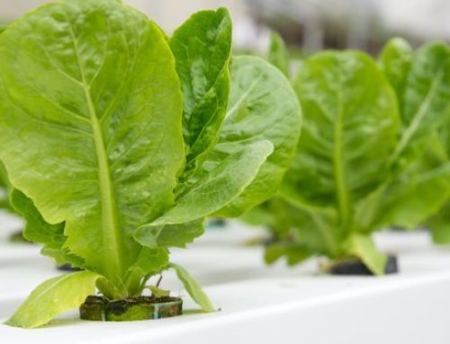 Hydroponic Irrigation Systems